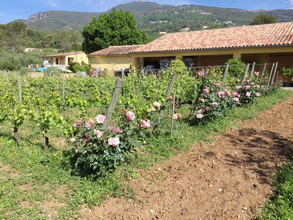 domaine st joseph tourrettes sur loup viticulteur bio partenaire