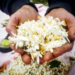 sejourner cote d azur provence gites appartements cannes grasse nice nb