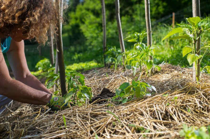 paillage sol permaculture blog