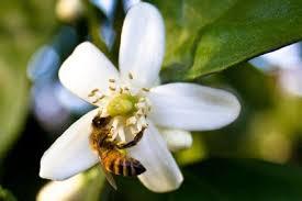 polinisation abeilles ruches miel blog