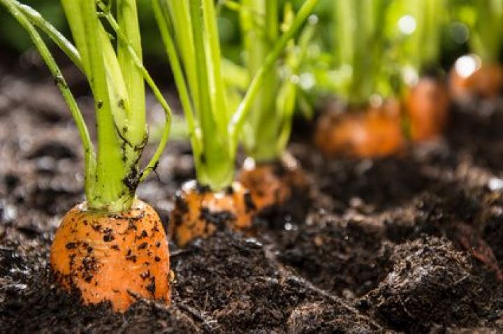 techniques permaculture jardin potager blog