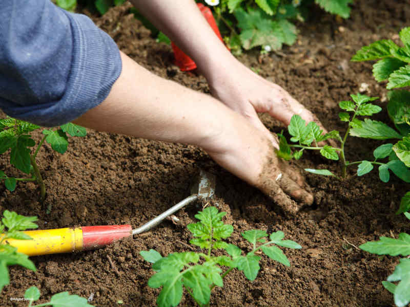 terre jardin soins permaculture blog