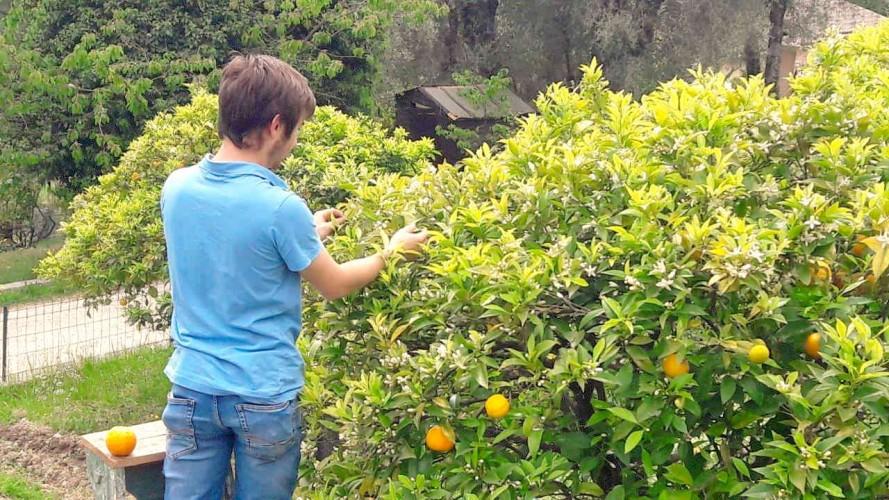 gite vacances cote d azur cannes chambres hotes agritourisme nice pascaline