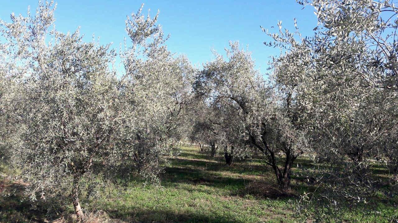 moulin opio huile olive aop nice tapenade produits regionaux cote d azur