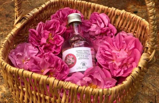 mas olivine peymeinade oliviers fleurs plantes parfums cote azur blog