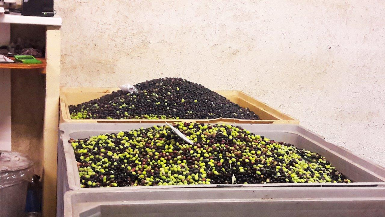 huile olives aop nice agritourisme grasse bio gites vacances