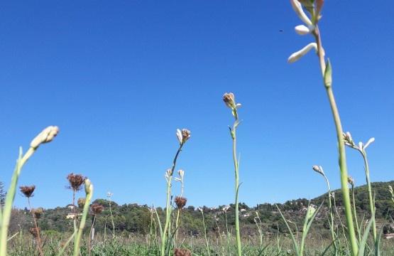 tubereuse fleurs parfums parfumerie absolue grasse blog