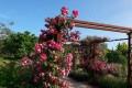 jardins musee parfumerie grasse patrimoine cote d azur decouvrir blog