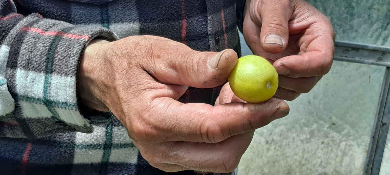 pepiniere fossat nice agrumes cote d azur patrimoine blog