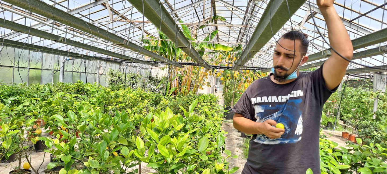 pepiniere fossat cremat plantes agrumes cote d azur blog