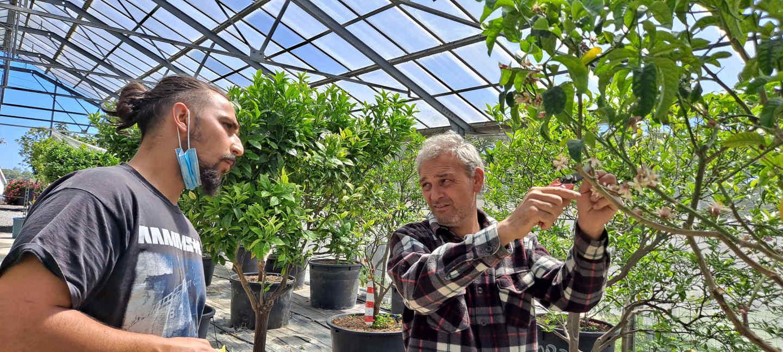 pepiniere fossat patrimoine cote d azur agrumes fruitiers blog