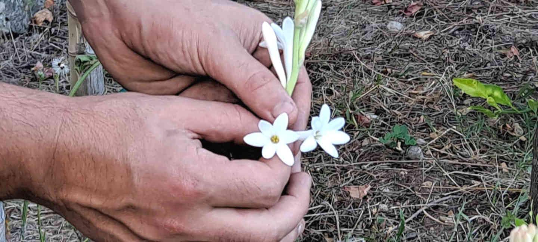 tubereuses fleurs parfums grasse cote d azur agritourisme blog